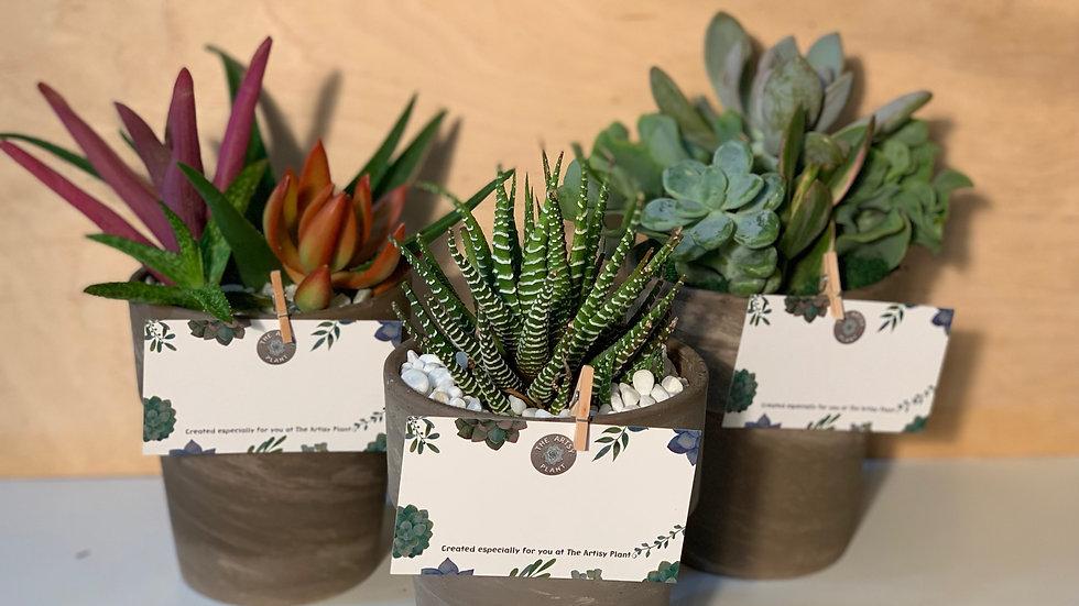Mini Farmhouse Pots