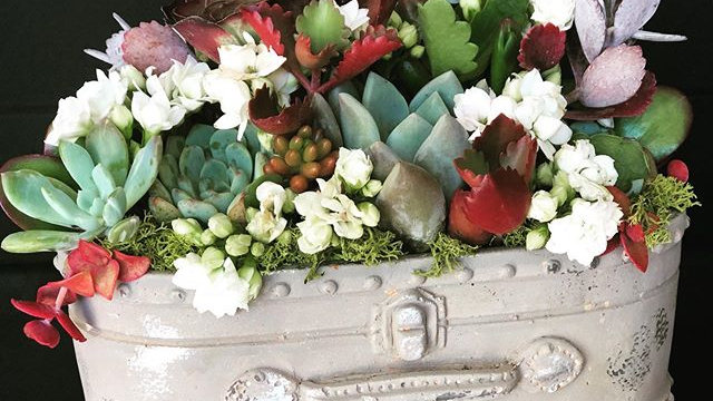 Suitcase of Succulents