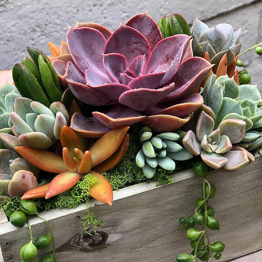 Succulent Farmhouse Box