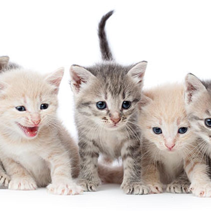 The Artsy Plant  --Proudly Co-Sponsoring Kitten Adoption