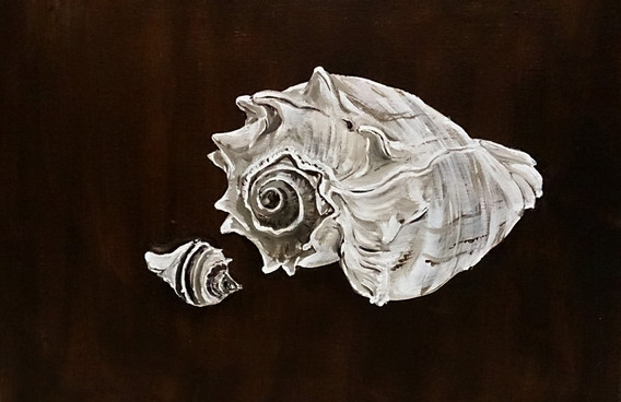Two Small conches