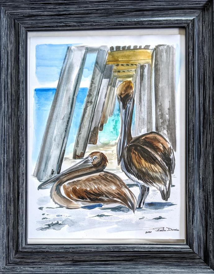 Pelicans at Naples Pier