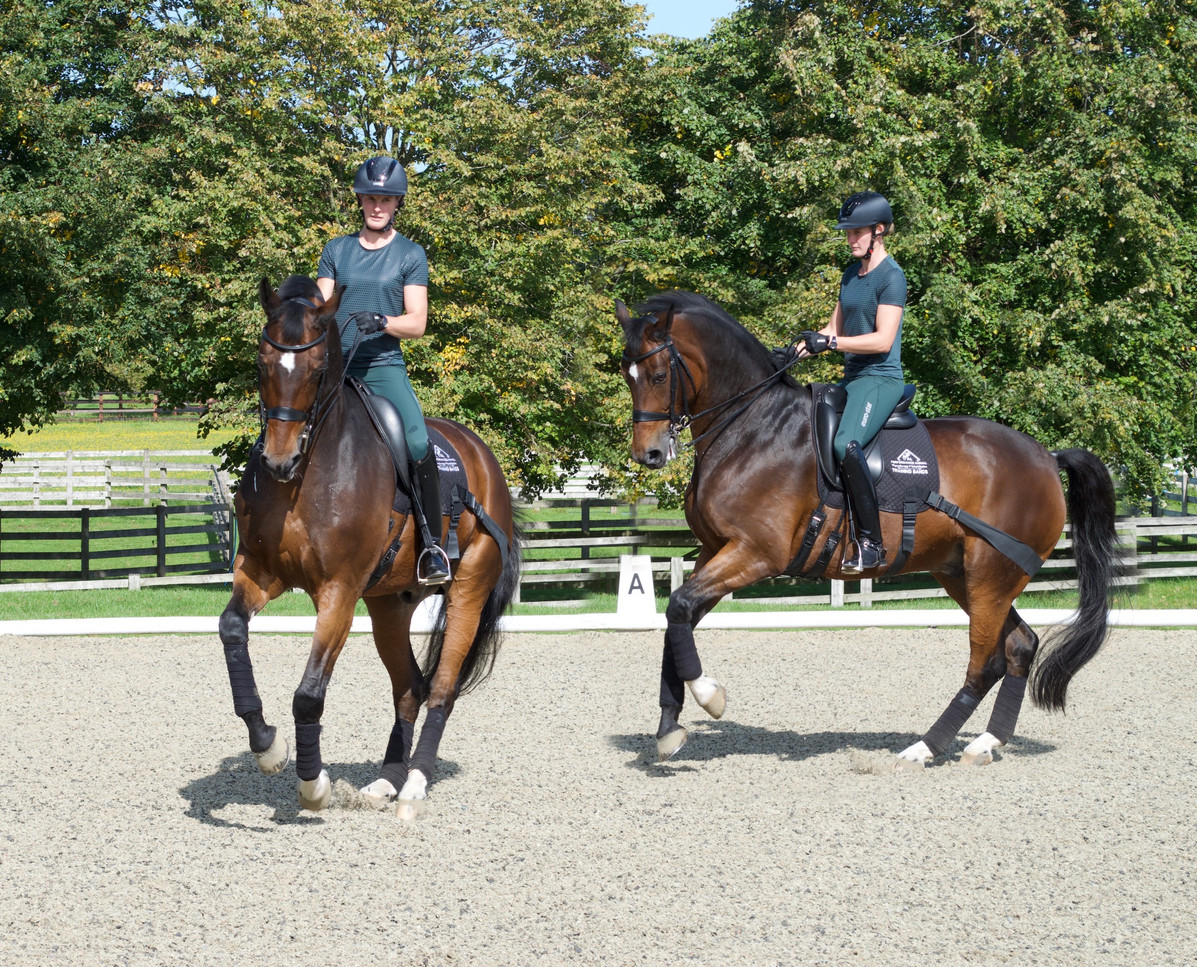 Canter pirouttes