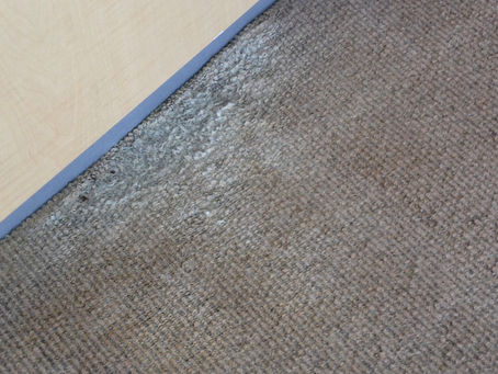 Tell Tale Signs Your Carpet Has Mould