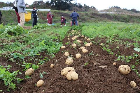 ②農業体験.JPG
