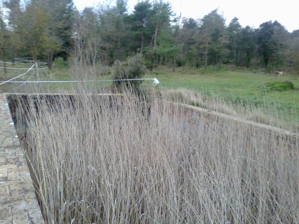 bassa amb canyes.jpg