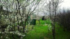 природа, красота, наслаждение, загородный отдых, веселье