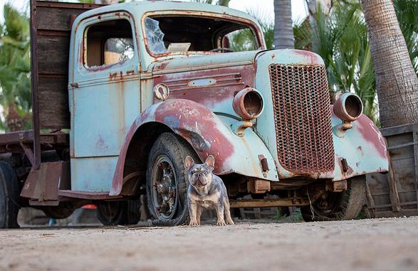 brucelee truck 1.jpg