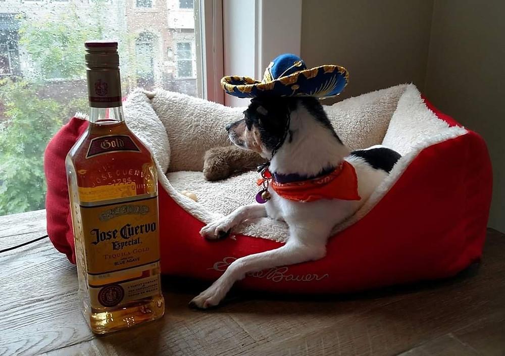 Maxi celebrating Cinco de Mayo