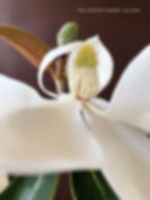southern magnolia flower center detail
