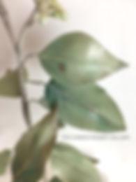realistic gumpaste seeded eucalyptus