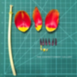 The Confectionery Gallery Blog | Studying a Tulip to Recreate in Sugar - dissected variegated red orange yellow tulip on gree measuring mat