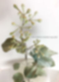 realistic seeded eucalyptus detail