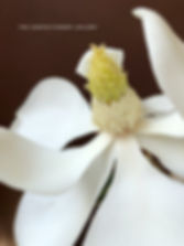 southern magnolia flower cente detail