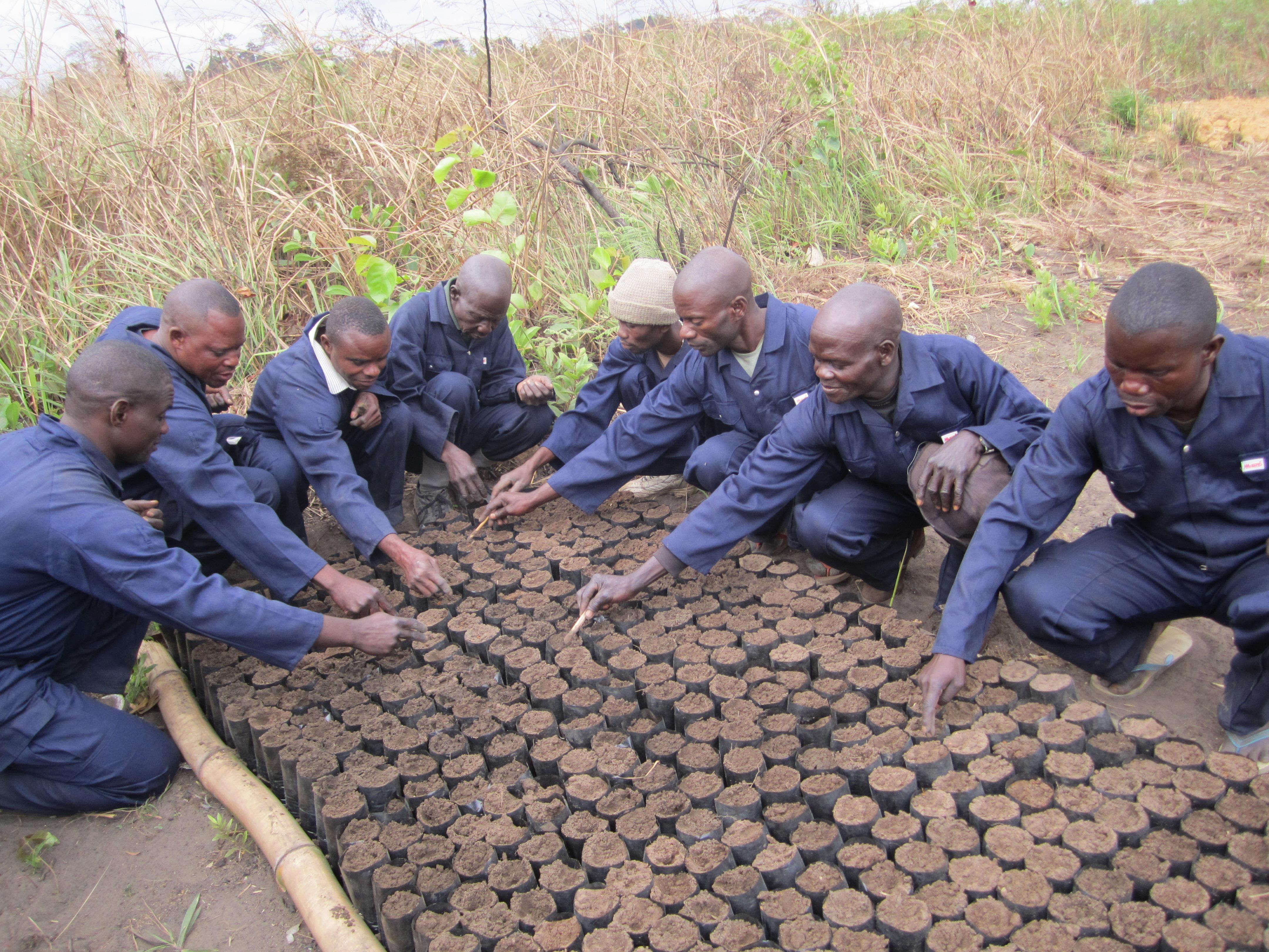 Préparation des acacias