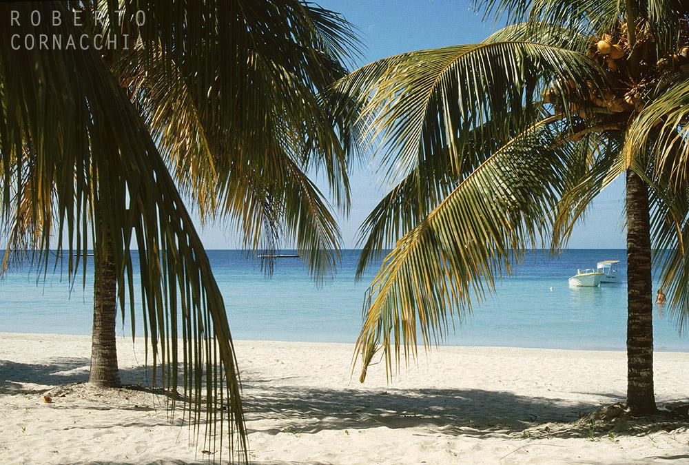 Giamaica93074.jpg