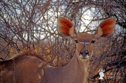 Namibia2007-070