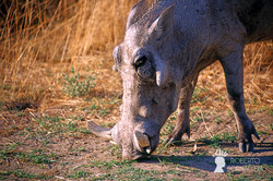Namibia2007-073