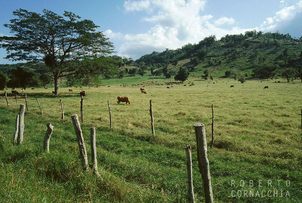 Giamaica93038.jpg