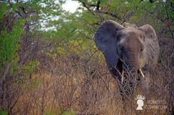 Namibia2007-065