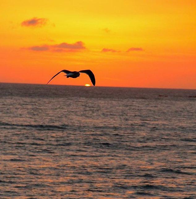 Seagull over the ocean
