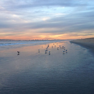 Peaceful sunset with seagulls