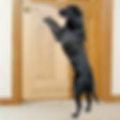 cane graffia porta