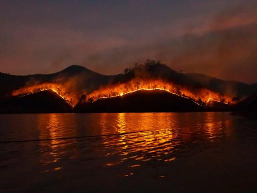 Die Waldbrände in Australien bedrohen nicht nur die Menschen dort…