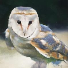 'Cailleach-Oidhche'/ Barn Owl (NEW)