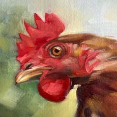 'Cearc' / Hen (NEW)