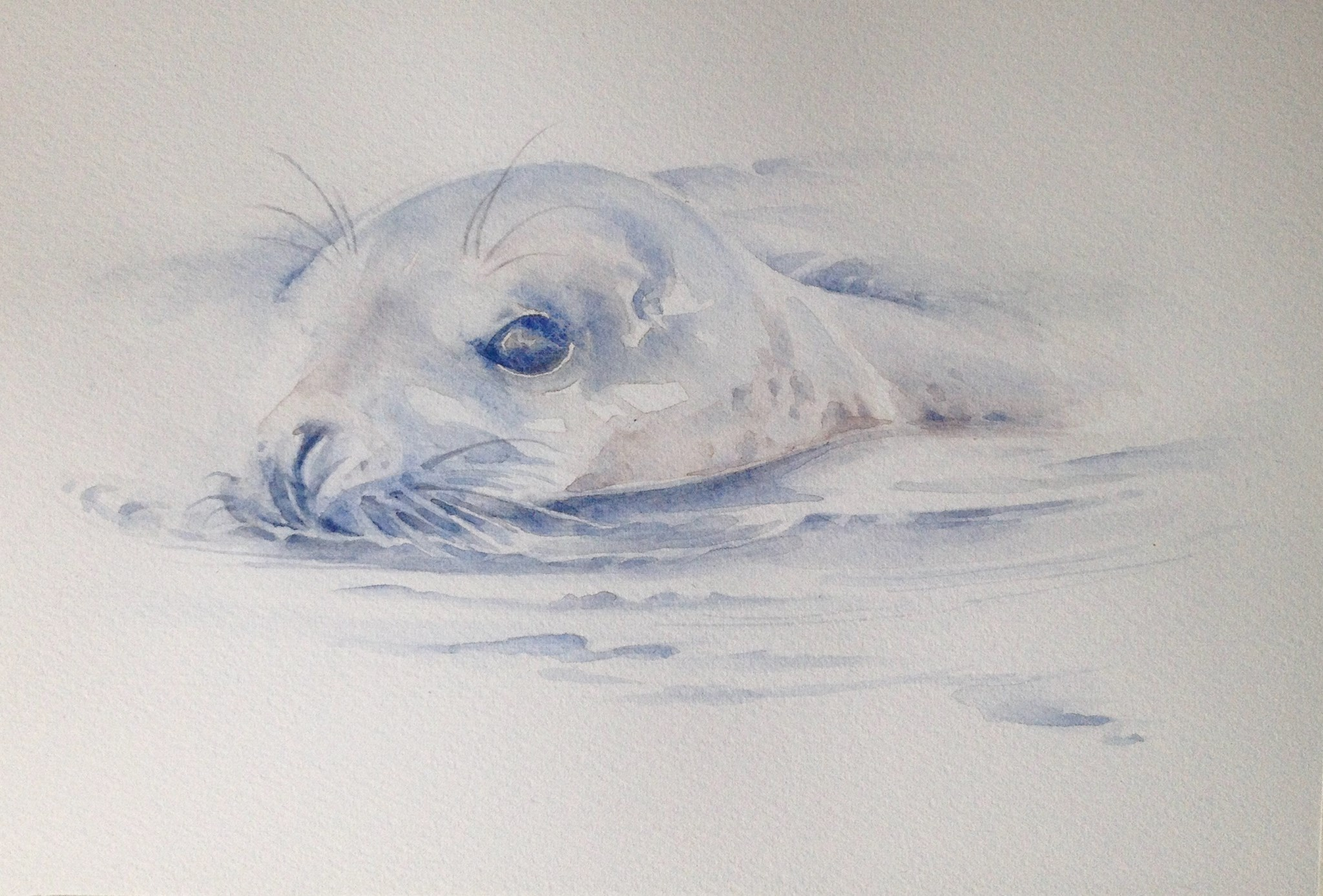 'Grey Seal' Watercolour on Fabriano, 140lb