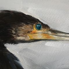 'Sgarbh' / Cormorant (SOLD)