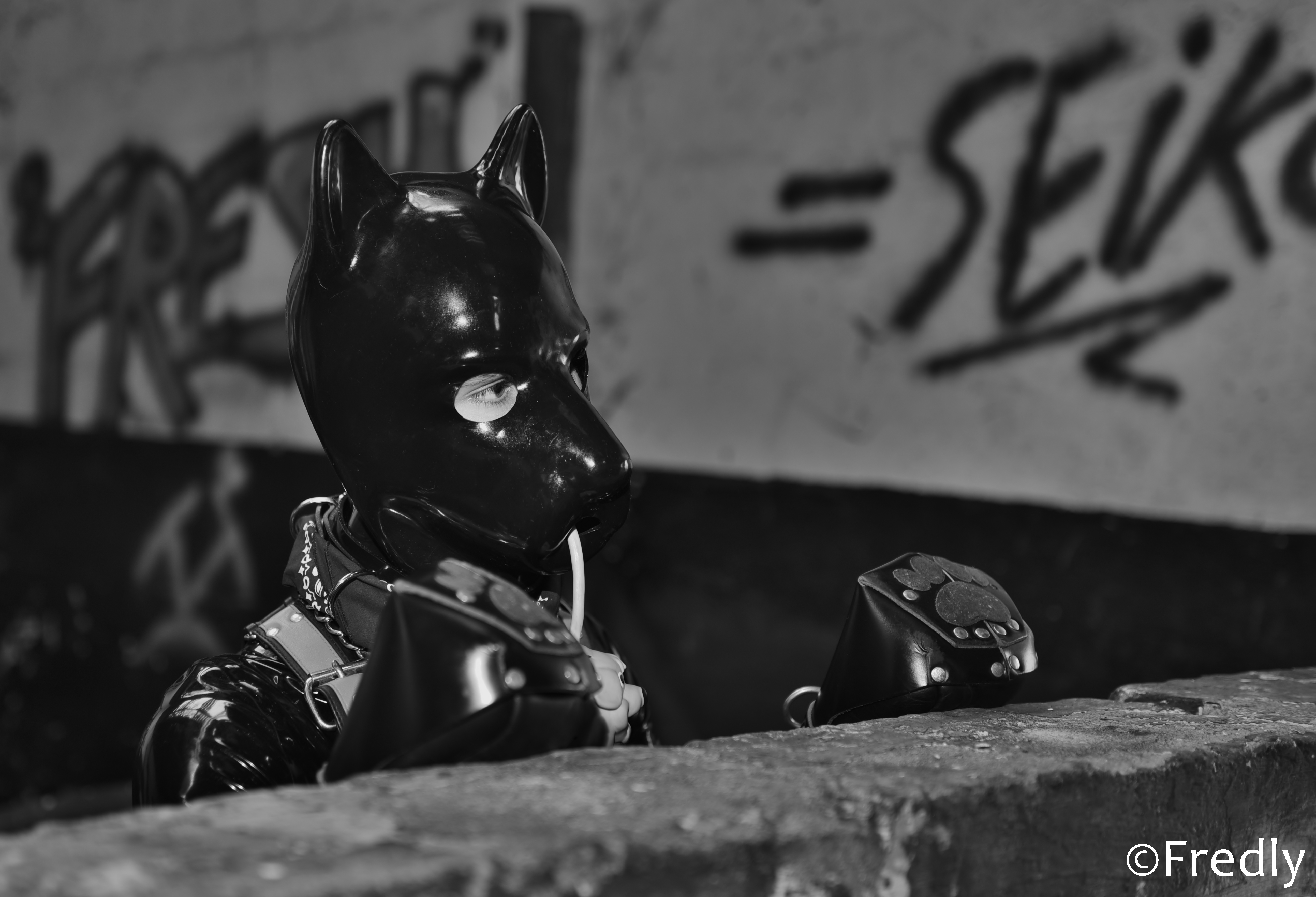 Mister Puppy Suisse (CH) 2016