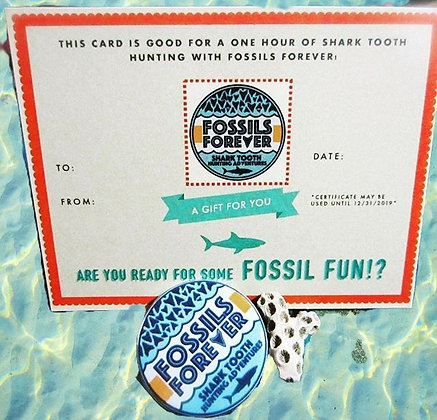 Shark Tooth Lover Gift Package