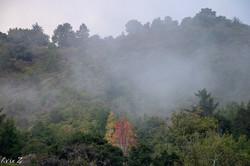 Big Sur Monterey fog