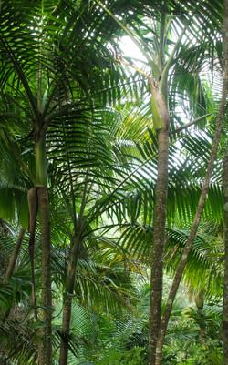 Trees in El Yunque