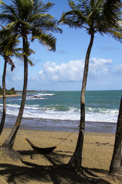 _  Beach and hammock