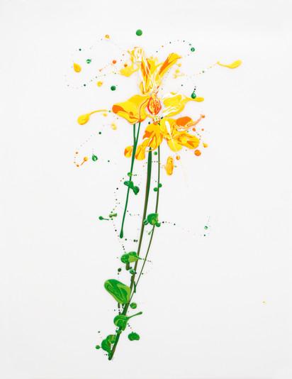 Flora XVIII