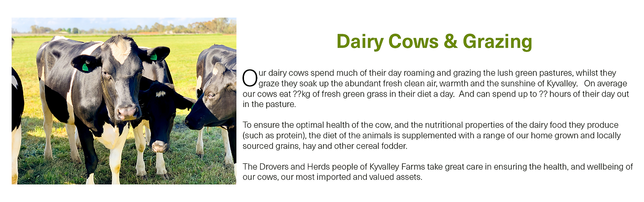 DairyCows&Grazing.png