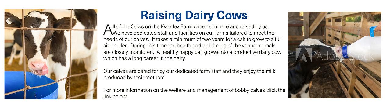 Raising Dairy Cows2.png