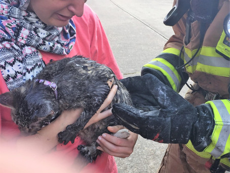 House Fire in Katy Kills Family Pet and Injures Firefighter