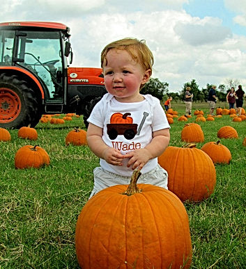 Pumpkin-patch-picture-by-katy | mashpee chamber of commerce.