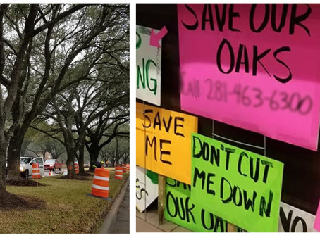 Nottingham Neighbors Join Together to Save 85 Trees
