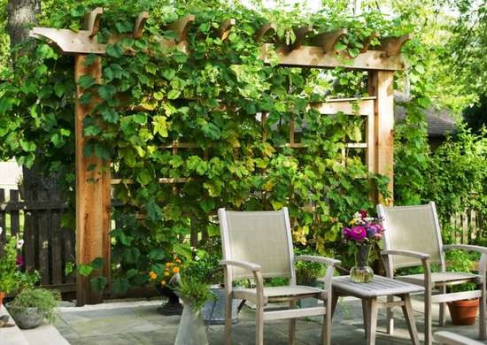 Vine-covered trellis behind patio chairs