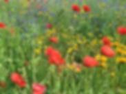 Blumenwiese_Lebenscafe.jpg