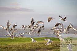 Free as a bird NZ