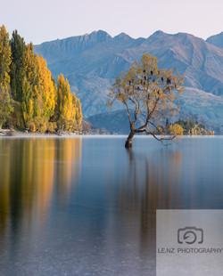 Lake Wanaka that tree Autumn NZ