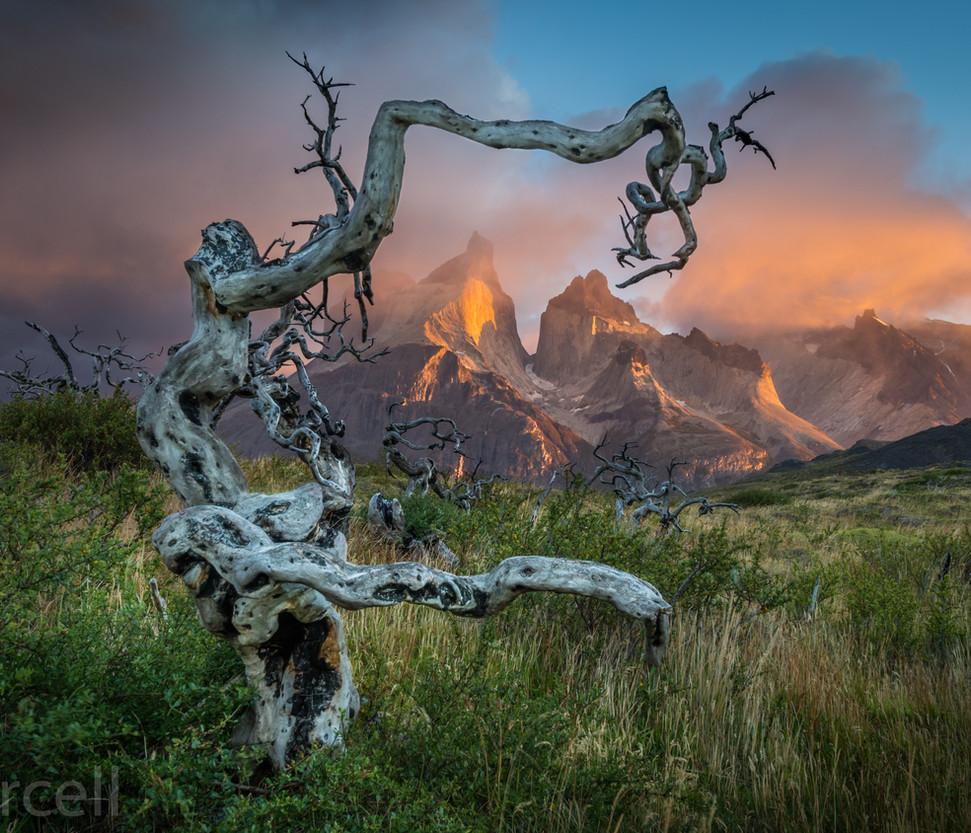 Patagonia Tree WM DSC_6024.jpg