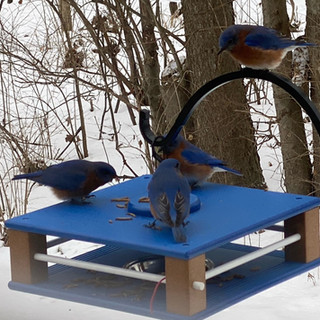 Jailhouse Bluebird Feeder