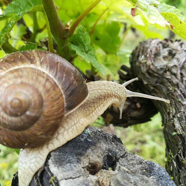 On va bientôt changer de métier #cquoicetemps  #escargot #domainegougis